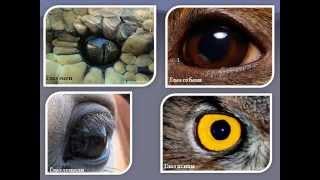 Свет в жизни живых организмов.AVI