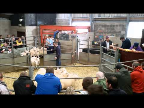 Lochmaddy sheep sales
