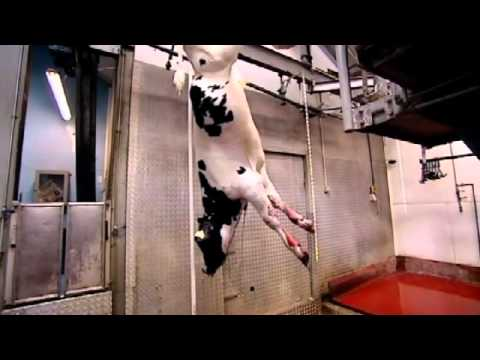 Janet Street-Porter takes her calves to the slaughter house