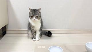 病院に連れていかれた後、がち凹みしてスネちゃった猫がこちらです…