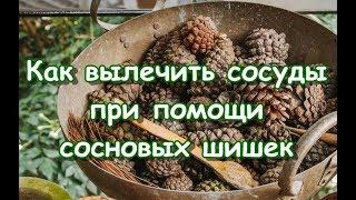 как вылечить сосуды при помощи сосновых шишек