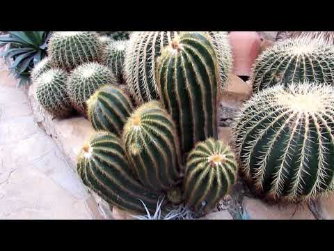 Our INCREDIBLE visit to Helmut Matk Cactus Nursery in Berlin, Germany