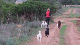 Running with the animals