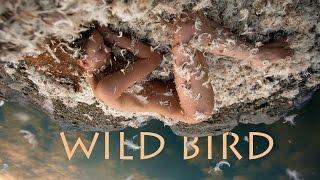 Wild bird. Backstage. Sony a6500 shoots