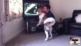 Собака защищает хозяина #2