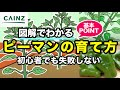 カインズ野菜図鑑 ピーマンの育て方 の動画、YouTube動画。
