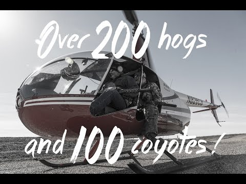 203 Hogs and 100 Coyotes Helicopter Hunt with Pork Choppers Aviation