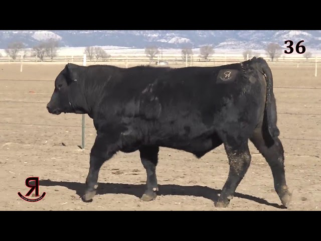 Reverse Rocking R Ranch Lot 36
