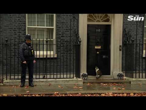 Hilarious moment Downing Street policeman knocks on Number 10 to let Larry cat in