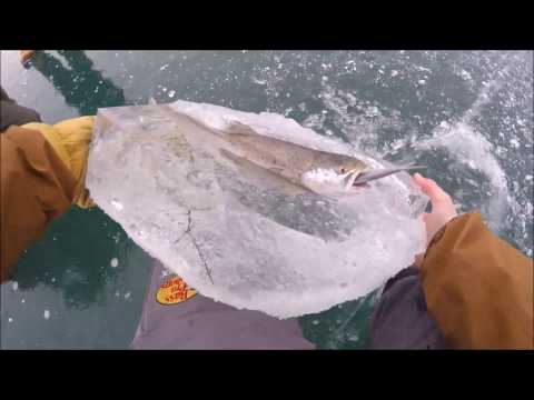 Your Morning Show - Fish Frozen in Ice Eating Another Fish