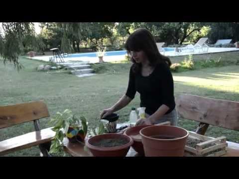Activa Mujer 137 - Jardinería - Potus cuidados y replante -
