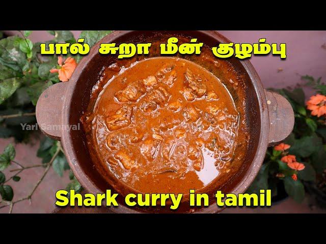 இப்படியெல்லாமா பால் சுறா மீன் குழம்பு வைப்பது   Shark Fish Curry Recipe in Tamil   Sura mean kulambu