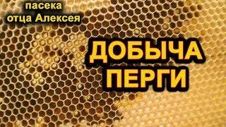 ПЕРГА (пчелиный хлеб). ДОБЫЧА ПЕРГИ