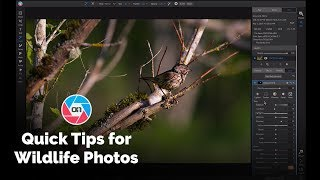 Quick Tips for Wildlife Photos