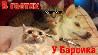 Смешные животные 2021 Смешно до слез Лучшие приколы с кошками