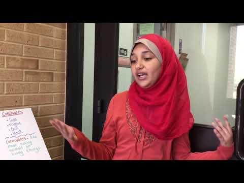 Food Webs Short Media Fair Project