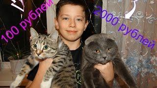 Дешевая кошка VS Дорогой! Вызов принят!