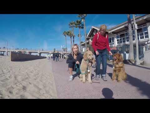 〔犬〕僕のアメリカ旅-United States travel-〔DOG〕