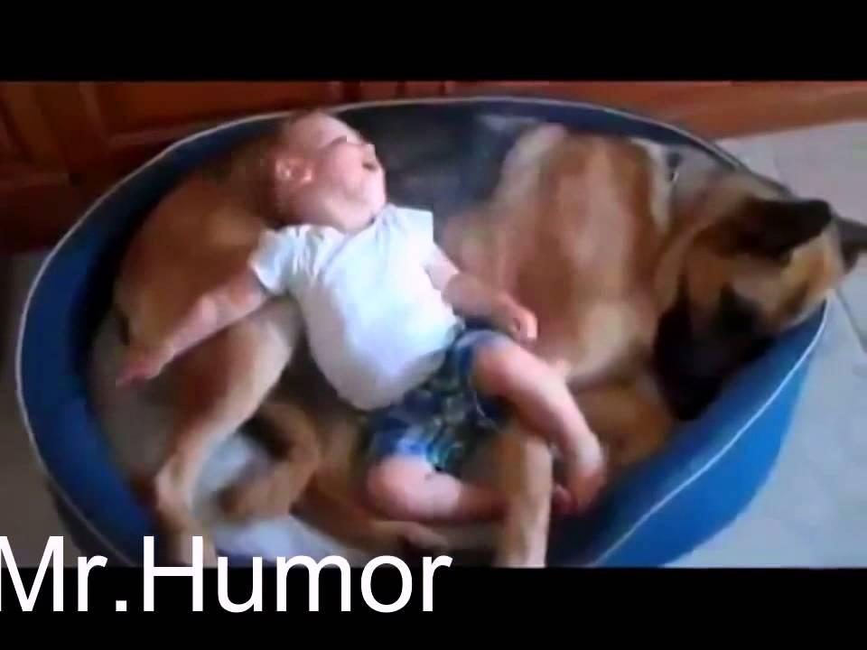 Прикольные животные видео смотреть онлайн до слез для детей, картинки про