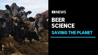 The craft brewery using beer and algae to reduce methane emissions | ABC News
