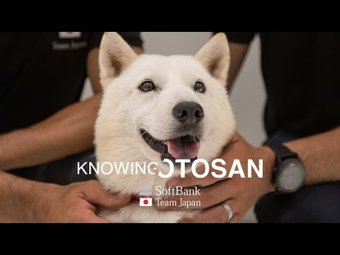 SoftBank Team Japan: Knowing Otosan