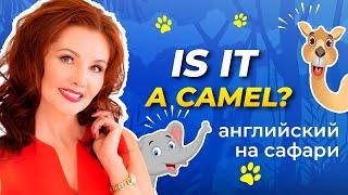 ДИКИЕ ЖИВОТНЫЕ ПО-АНГЛИЙСКИ ДЛЯ ДЕТЕЙ! Уроки на Сафари/Изучаем Английский с Нуля/Camel-Elephant