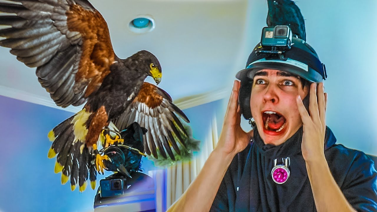 attacked-by-giant-bird-prank