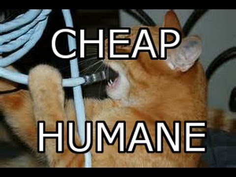 How To Stop Cats From Chewing on Wires - Safe and Effective! - YouTube