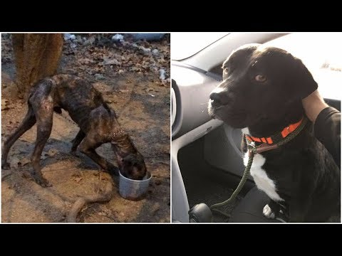 An emaciated dog was rescued by protection group and taken to adoption events to meet its new owner