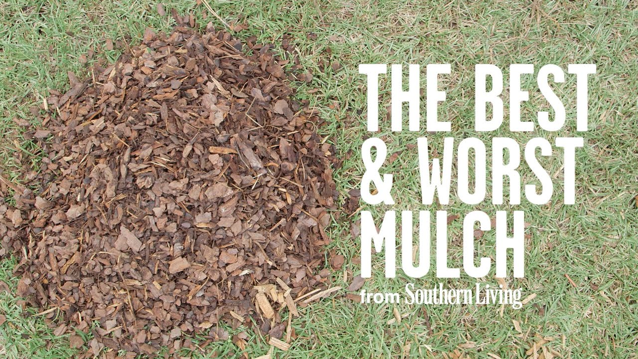 The Best And Worst Mulch For Your Garden Southern Living You