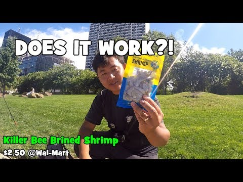 Fishing With PACKED SHRIMP!! Does It Work?! (Philadelphia, PA)