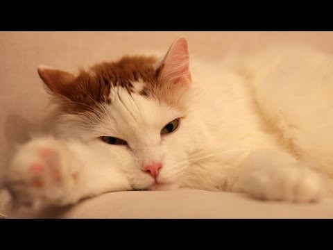 Google Partnerships Head: My Cat Should Be Famous - Diana Skaar Career Girls Role Model