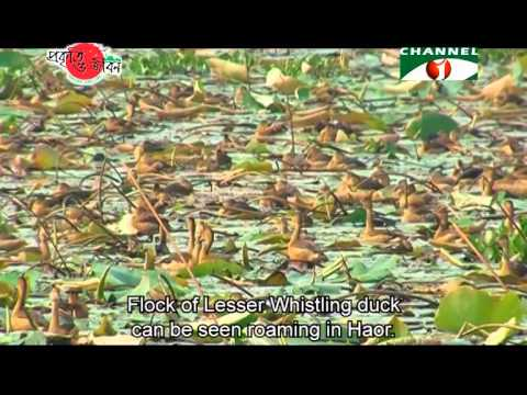 Nature and Life - Episode 183 (Tanguar Haor)