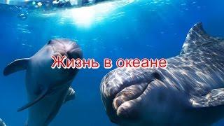 Океан Жизнь в океане классные съемки!