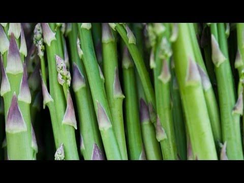 Transplanting Wild Aspargus To Garden Bed