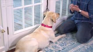 Potty Training How to Train your Dog to RING A BELL to be Let Outside