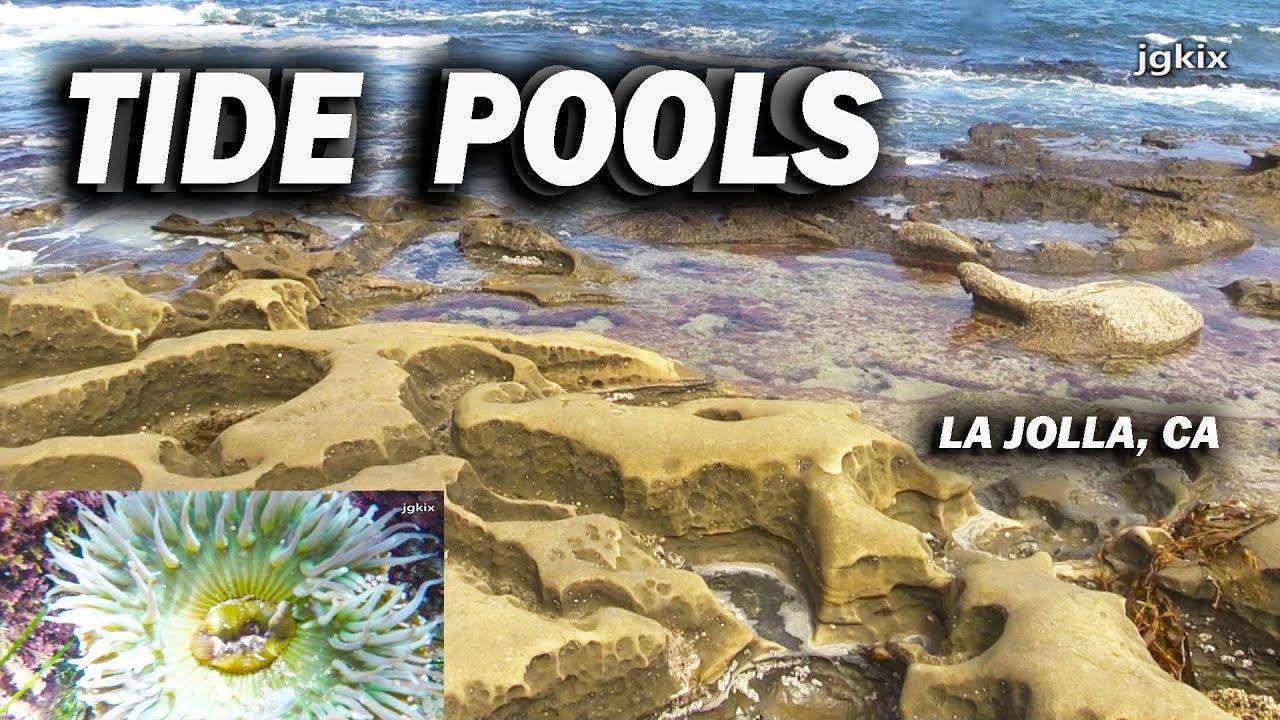 Tide Pools In La Jolla California Youtube