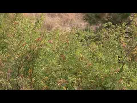 Wildlife Refuge in AVCHD format