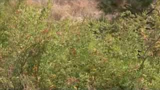 Wildlife Refuge in AVCHD format