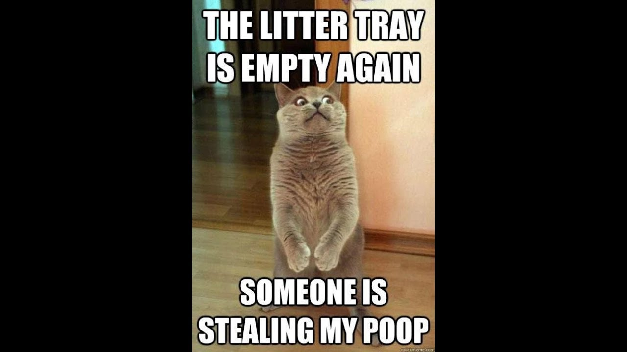 Image of: Kittens Funny Cat Photos With Captions Part Quotations And Quotes Funny Cat Photos With Captions Part Youtube
