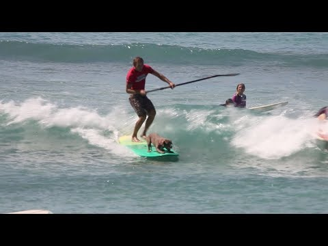 Surfing Dogs Take Over Duke's Oceanfest in Waikiki - Freesurf Magazine