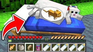 REALISTIC MINECRAFT  CAT OCELOT GIVES BIRTH IN MINECRAFT