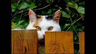 Смешные забавные котята. Часть №4