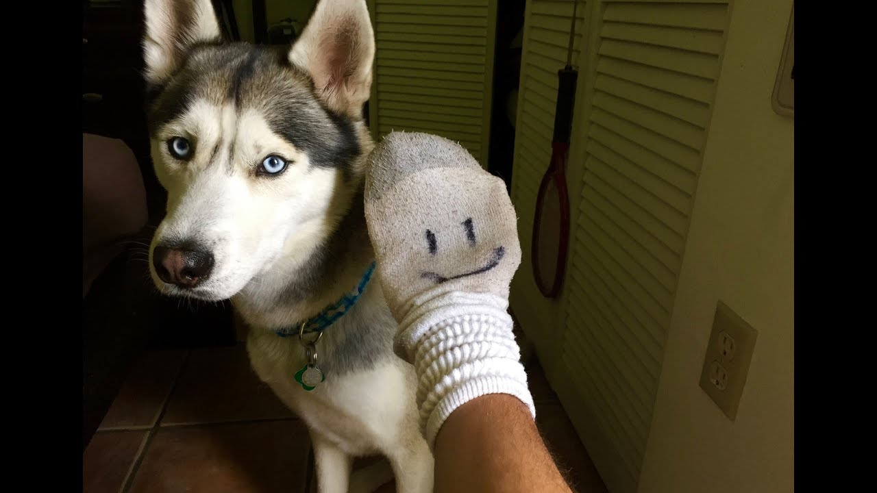 Husky and the Extra Sock!