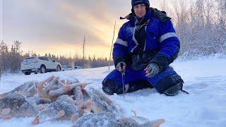 Первые полосатые монстры в Новом 2021 году. Первая зимняя рыбалка 2021.