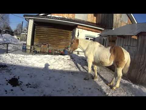 Игры уход за лошадьми Уход за лошадьми игры Уход за