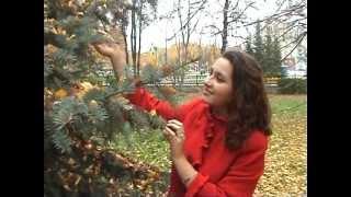 Красивая чувашская песня. Исполняет Антонова Наталья