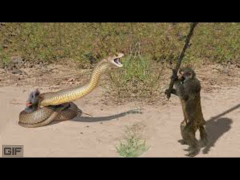 Funny Animals ; Funny Vedio Again And Again  #013