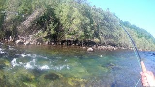 Trout fly fishing|Fly fishing for brown trout in clear water|Fly fishing Croatia