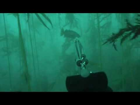 Spearfishing big sur
